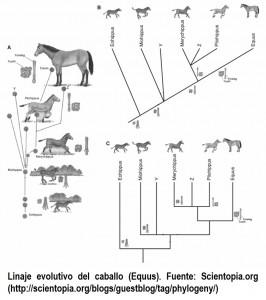 Parentezco evolutivo entre especies
