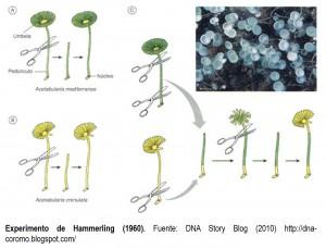 Transmisión de la información genética 2