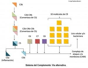 sistema inmune2